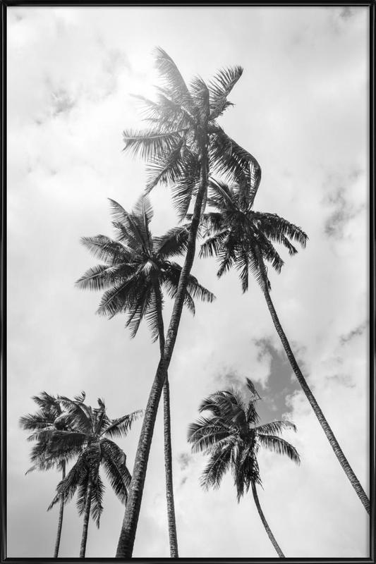 Palme Bounty -Bild mit Kunststoffrahmen