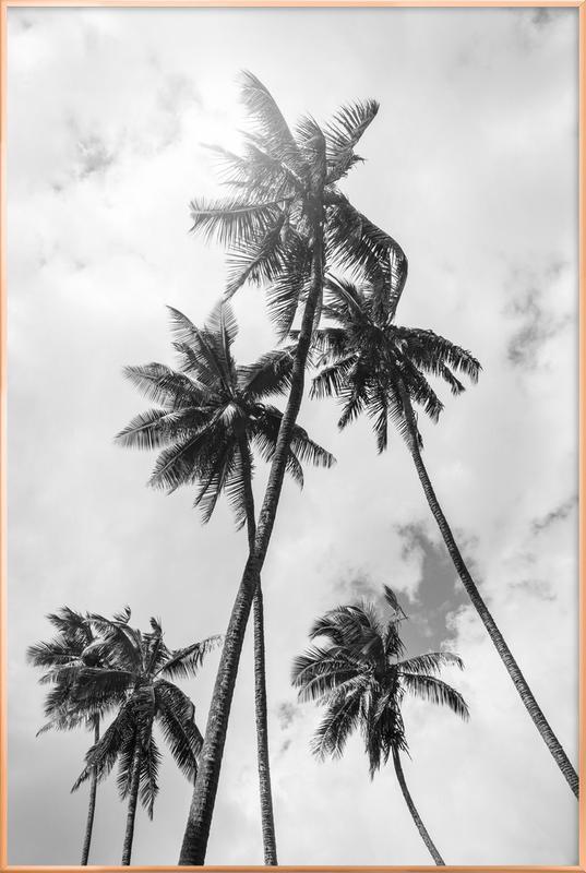 Palme Bounty -Poster im Alurahmen