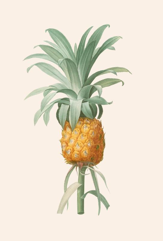 Ananas acrylglas print