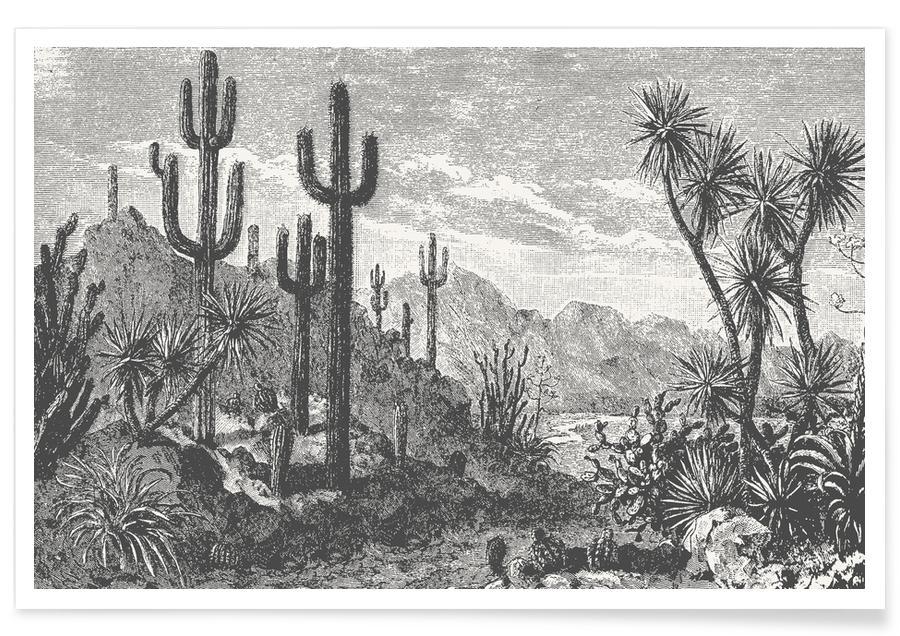 Noir & blanc, Cactus, Cacti in Mountains affiche