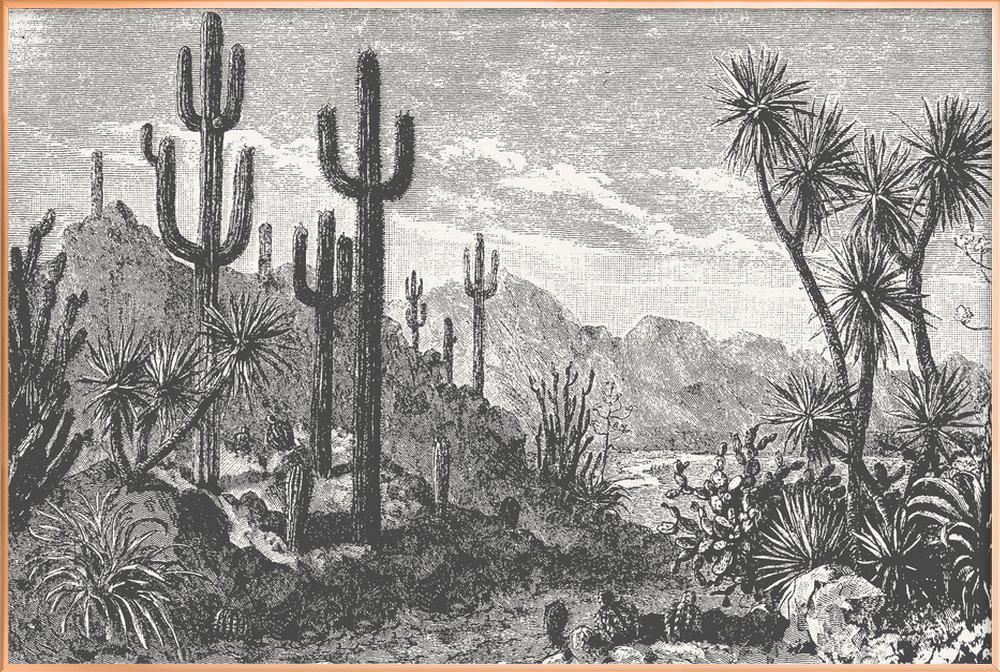 Cacti in Mountains poster in aluminium lijst