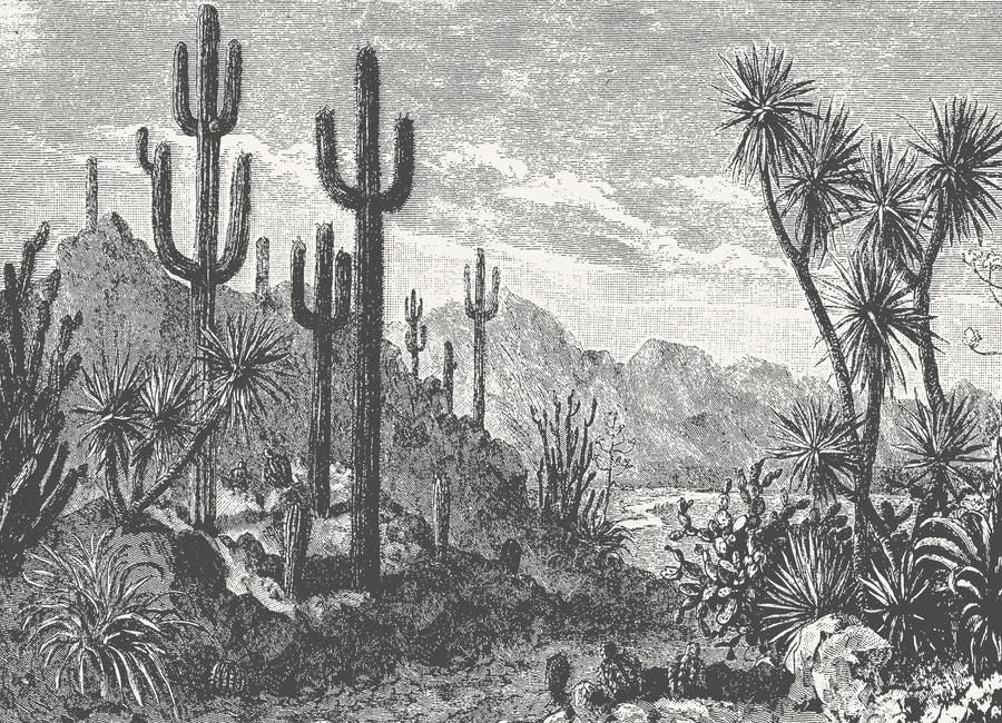 Cacti in Mountains canvas doek