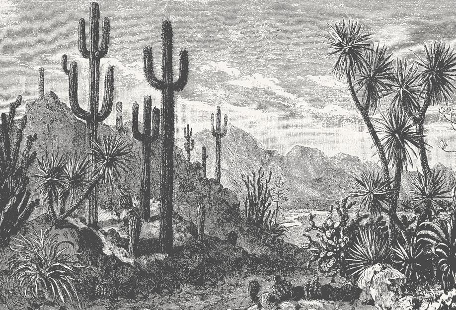 Cacti in Mountains acrylglas print