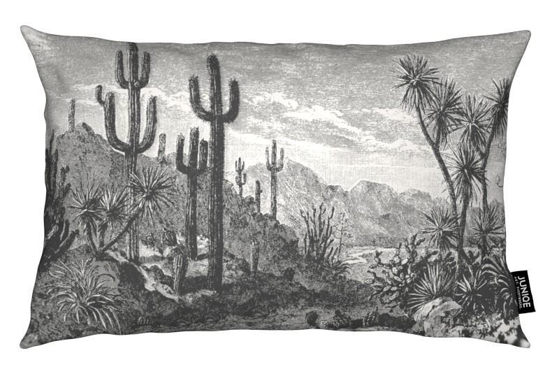 Schwarz & Weiß, Kaktus, Cacti in Mountains