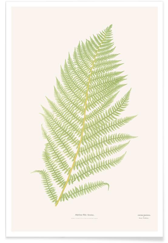 Feuilles & Plantes, Ferns 2 affiche