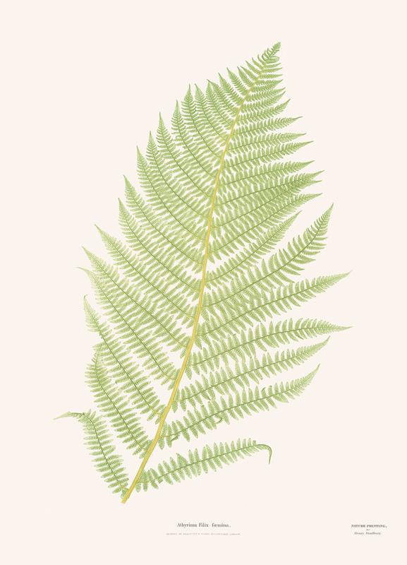 Ferns 2 Canvas Print