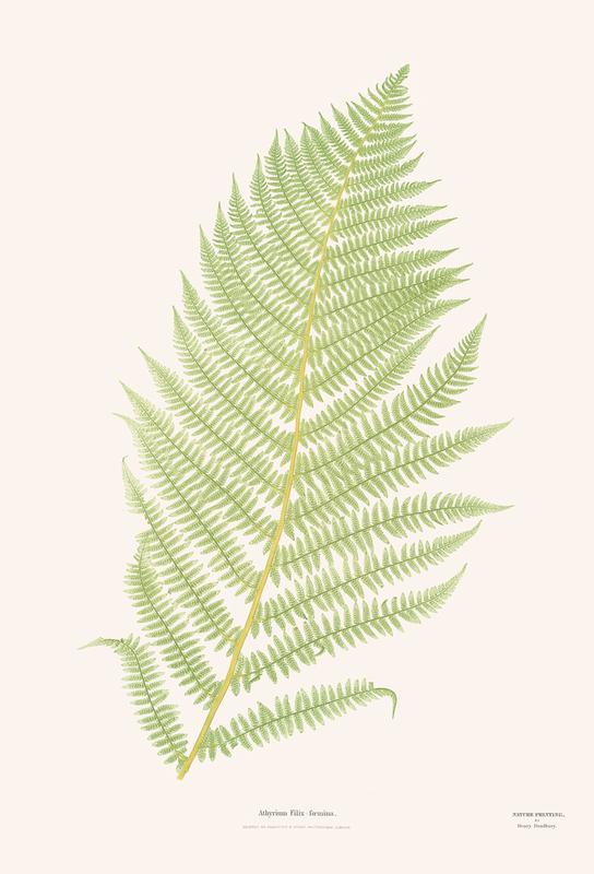 Ferns 2 acrylglas print