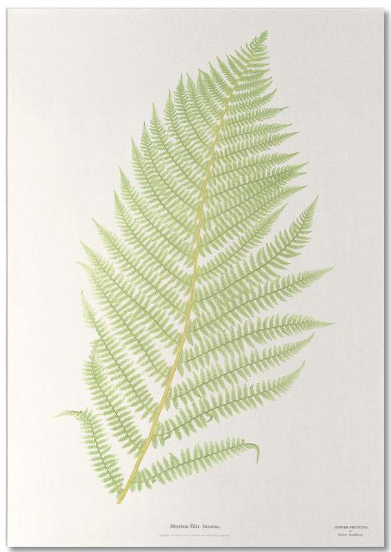 Ferns 2 Notepad