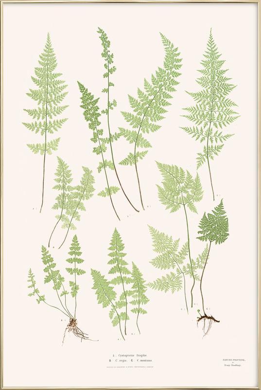 Ferns -Poster im Alurahmen