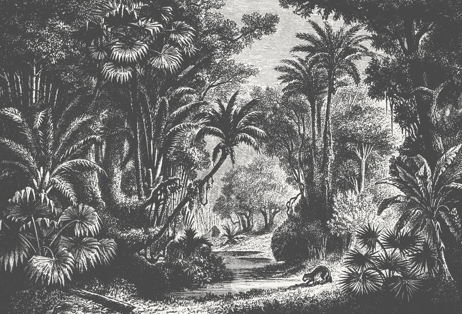 Indian Jungle acrylglas print
