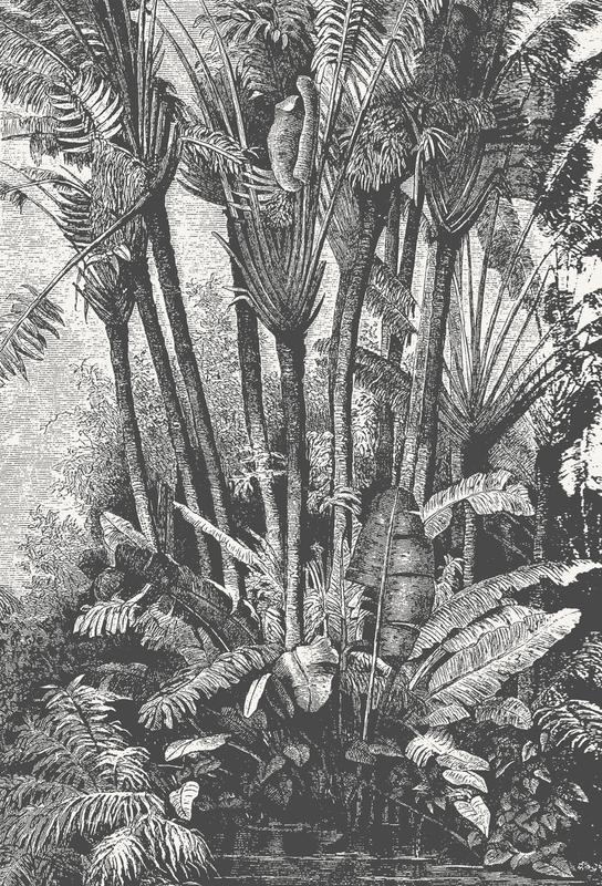 Palms in Water -Acrylglasbild