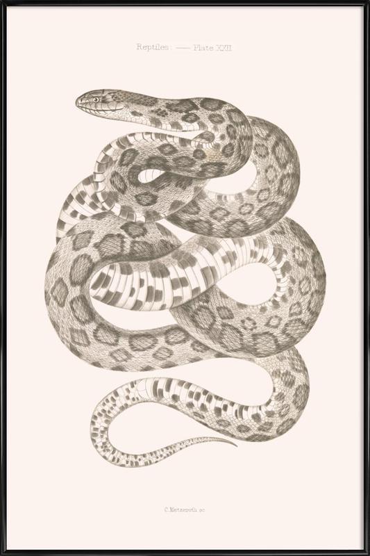 Reptiles - Plate XXII ingelijste poster