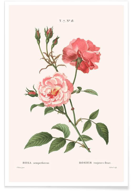 , Rosier - Toujours Fleuri poster