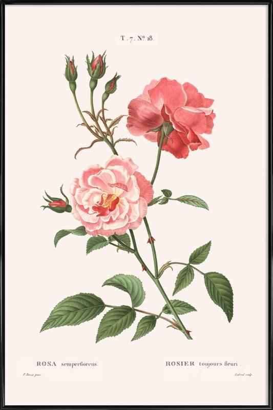 Rosier - Toujours Fleuri Framed Poster