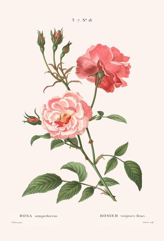 Rosier - Toujours Fleuri alu dibond