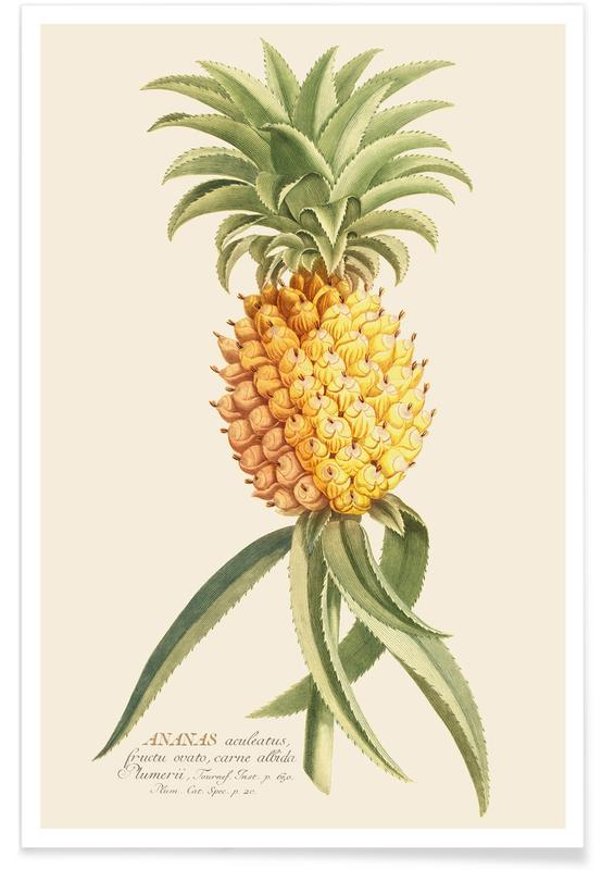 Ananas, Pineapple 2 affiche