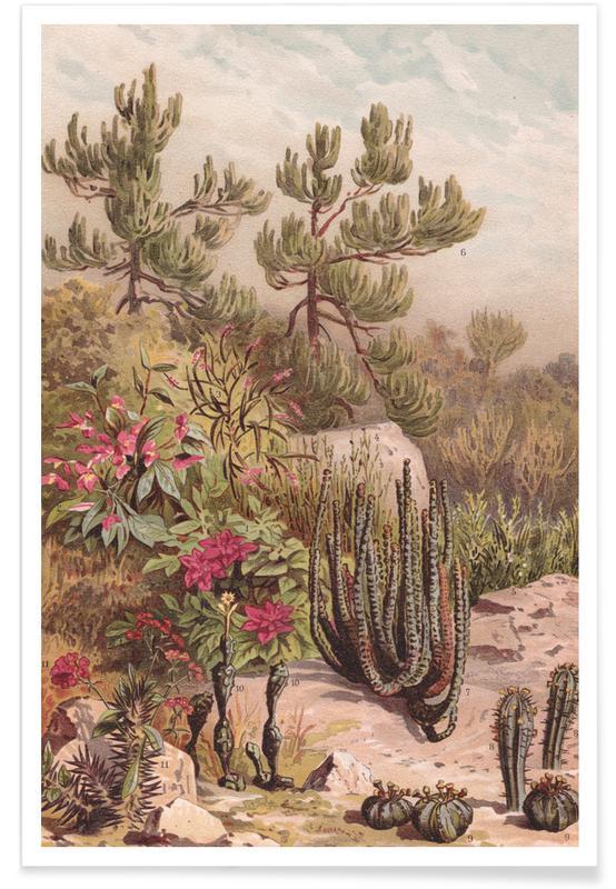, Euphorbiaceen Crop   Lowres affiche