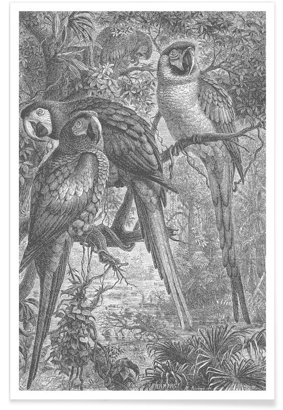 Parrots, Macaws Parrots Poster