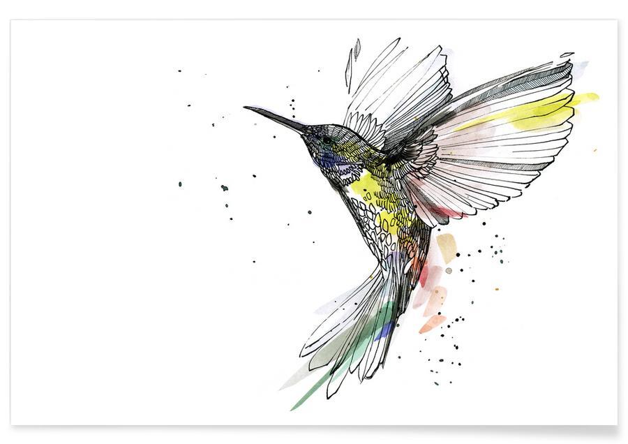 Kolibries, Kadifa poster