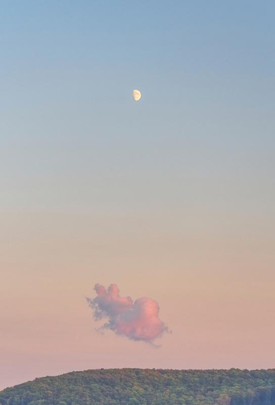 Forest Cloud Moon -Alubild