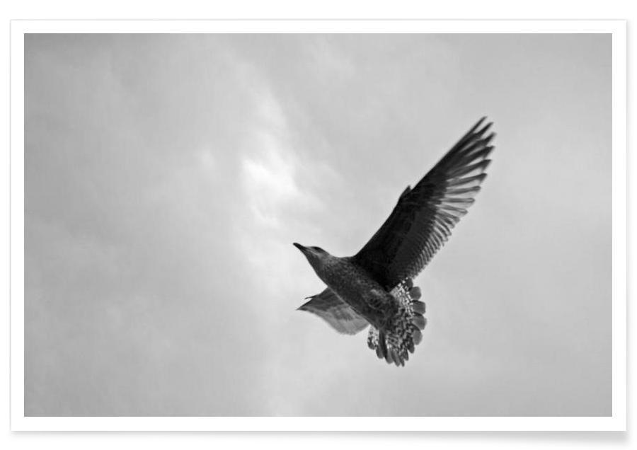 Sort & hvidt, Måger, A seagull Plakat