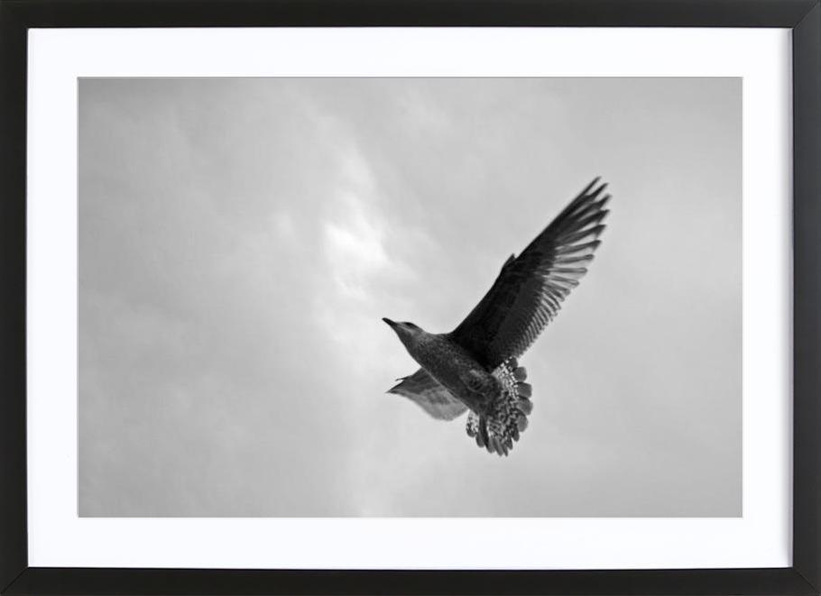 A seagull -Bild mit Holzrahmen