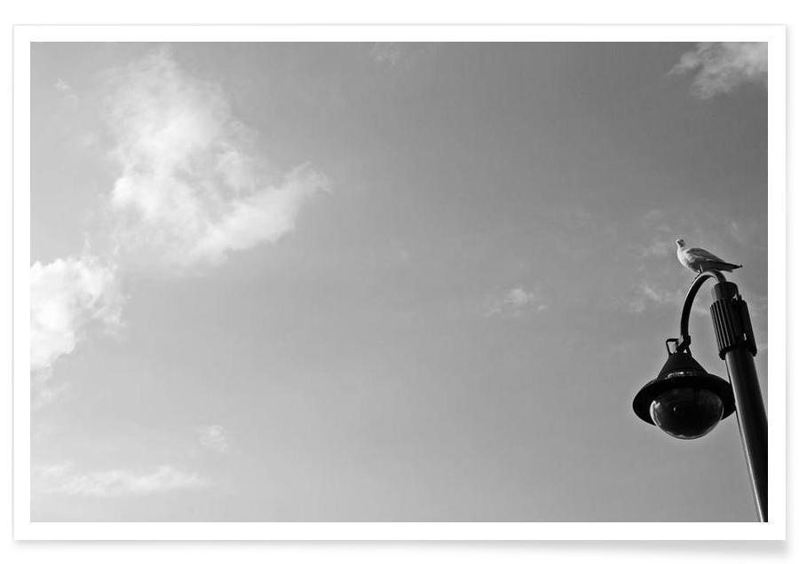 Noir & blanc, Mouettes, Seagull on lantern affiche