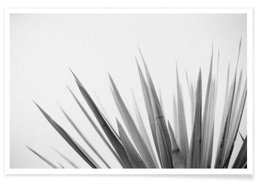 Schwarz & Weiß, Pointy Leaves -Poster