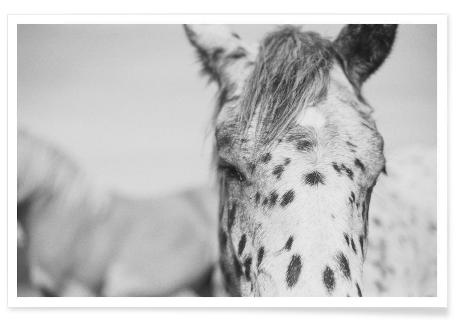 Schwarz & Weiß, Pferde, Kleiner Onkel -Poster