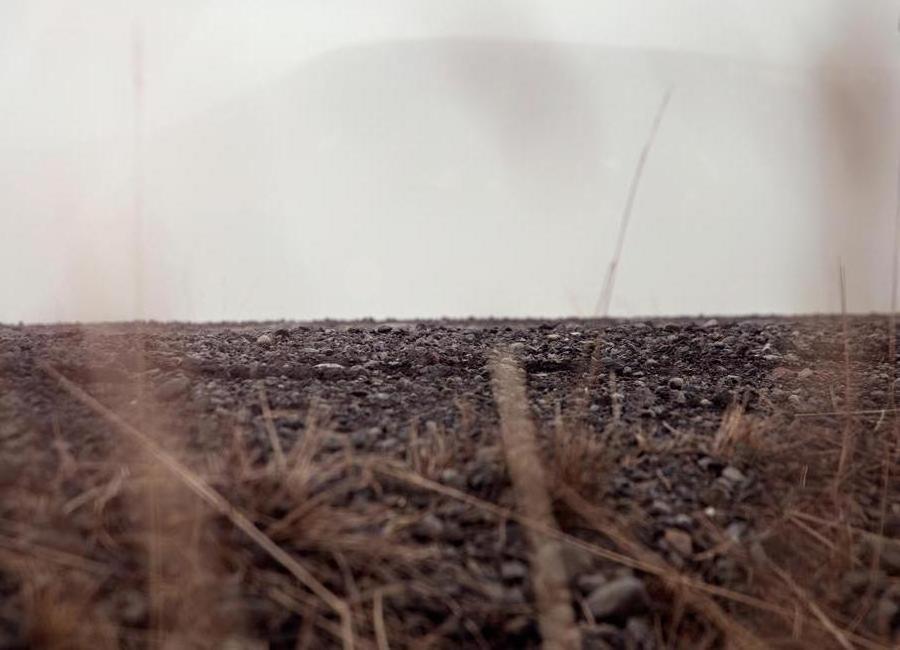 Hiding ground Canvas Print