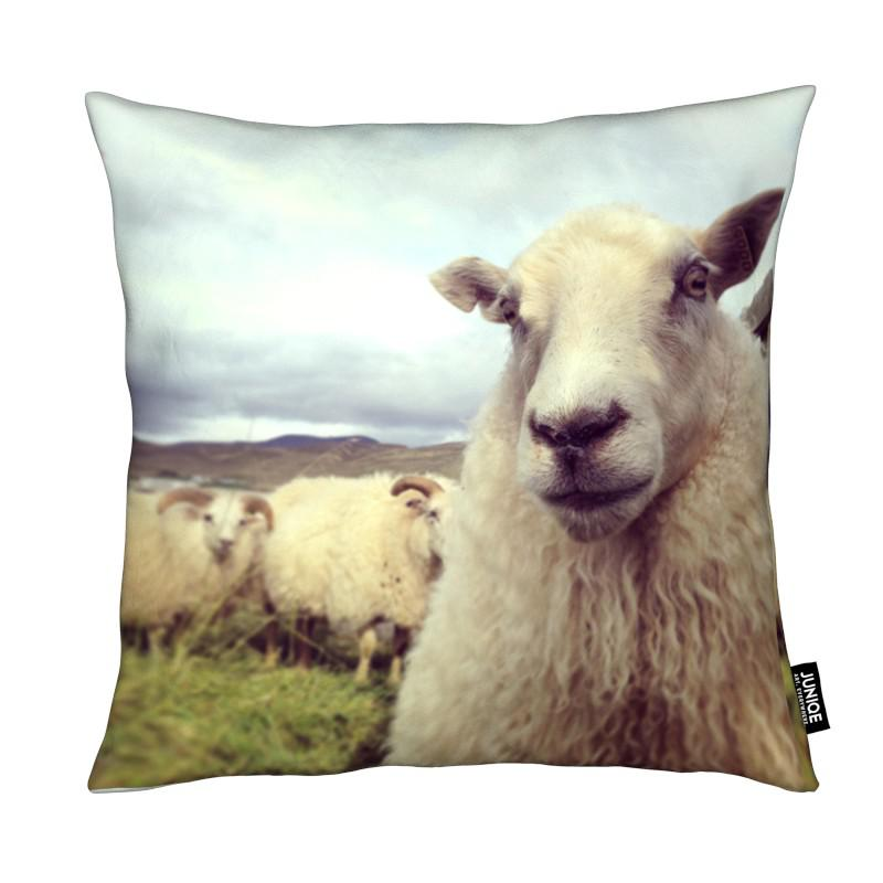 Moutons, Whats Up coussin