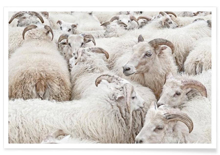 Schafe, Stick Together -Poster