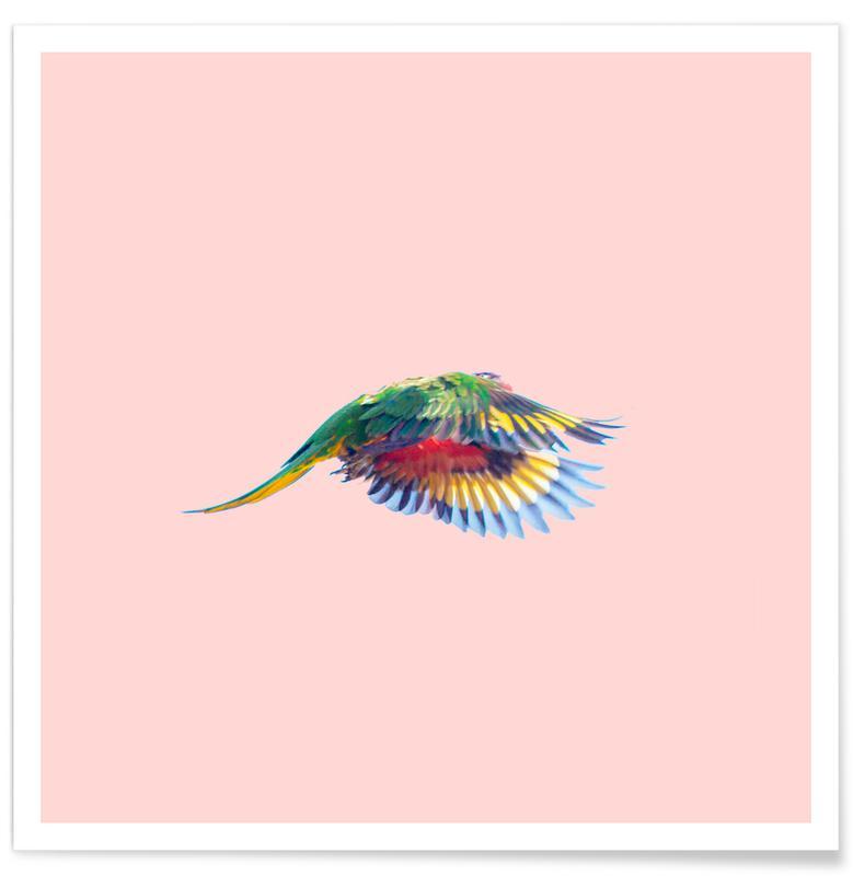 Perroquets, Pink Parrot affiche