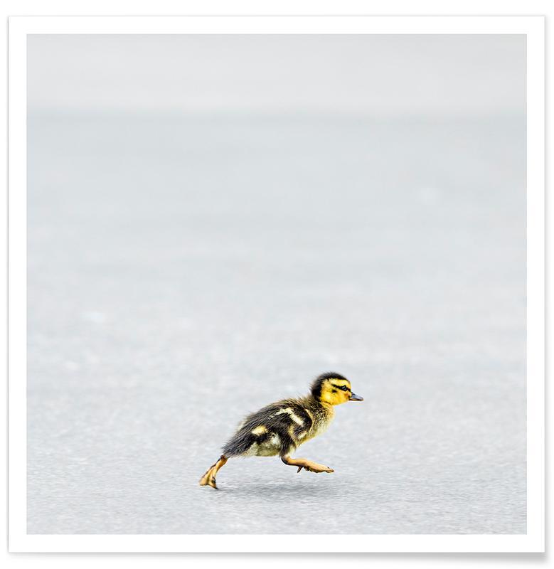 Eenden, Duckling poster