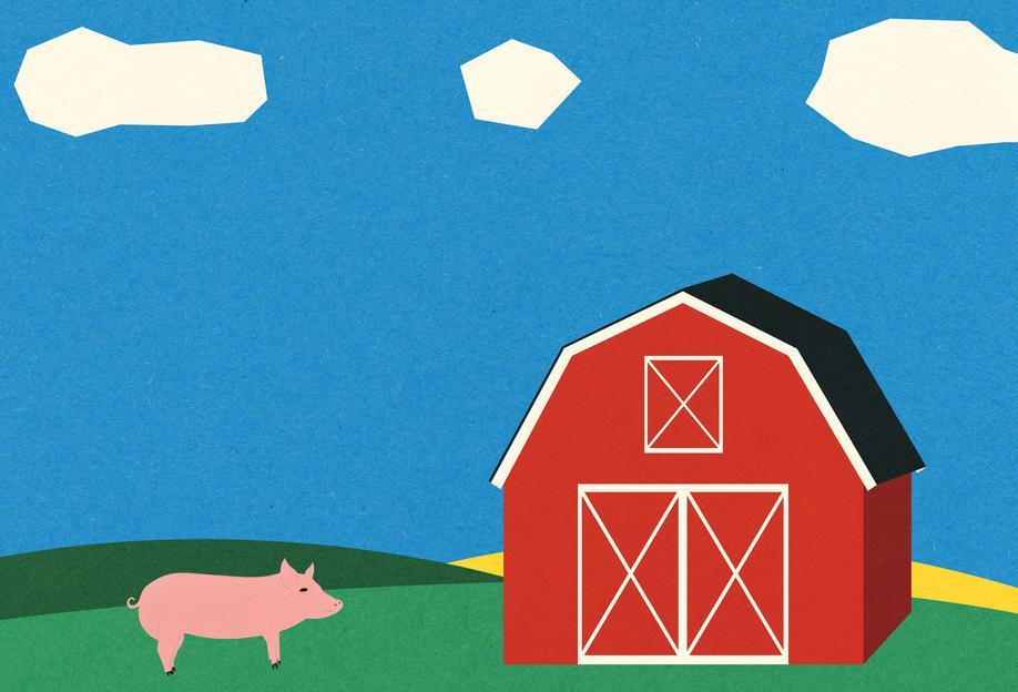 Pig and Barn Acrylic Print