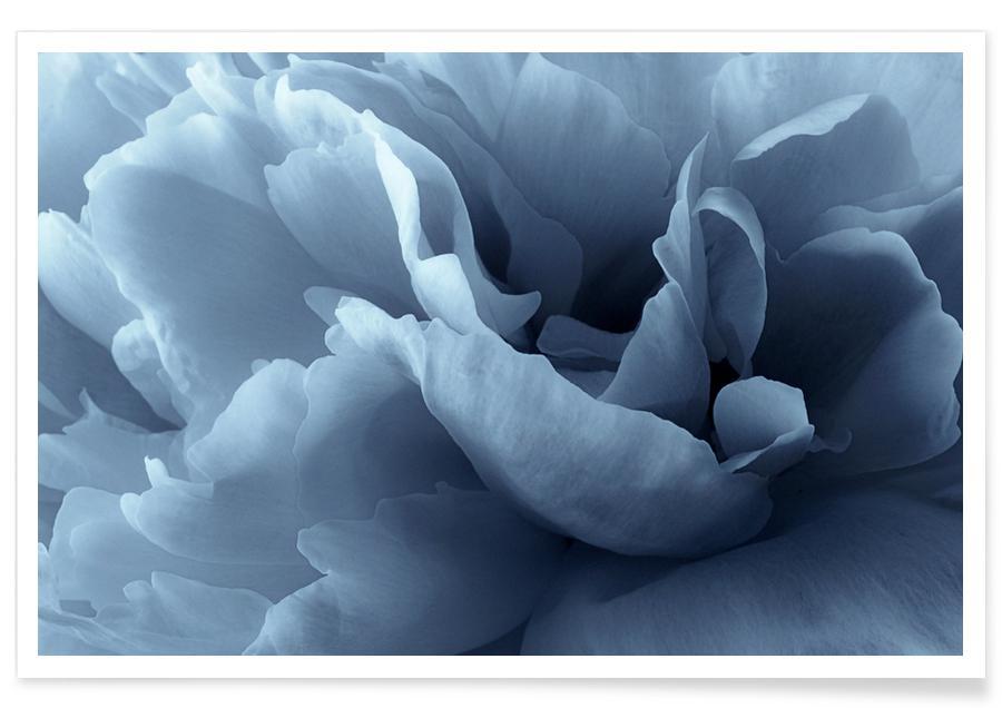 Pfingstrose-Blütenblatt-Abstrakt-Fotografie -Poster
