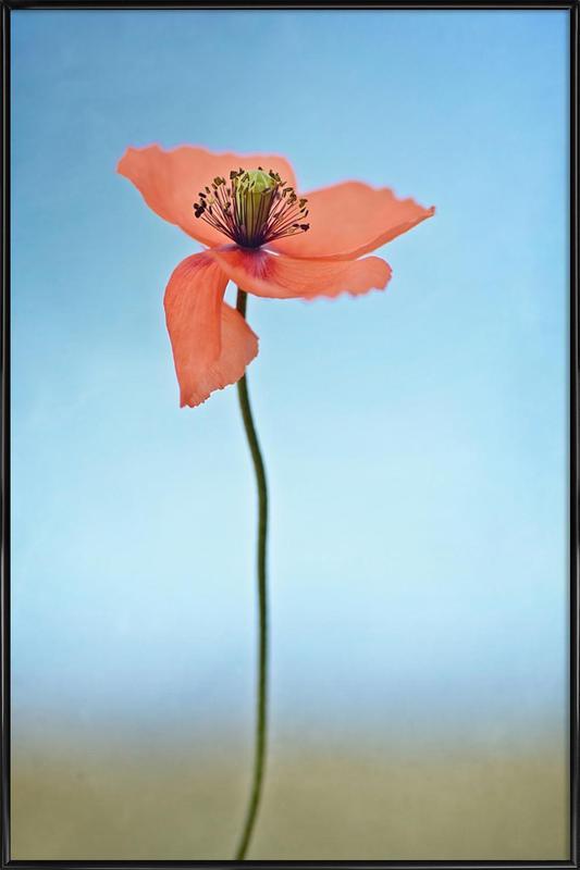 Red Poppy -Bild mit Kunststoffrahmen