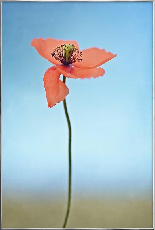 Red Poppy -Poster im Alurahmen