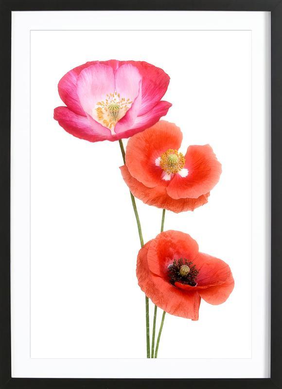 Colourful Poppies affiche sous cadre en bois