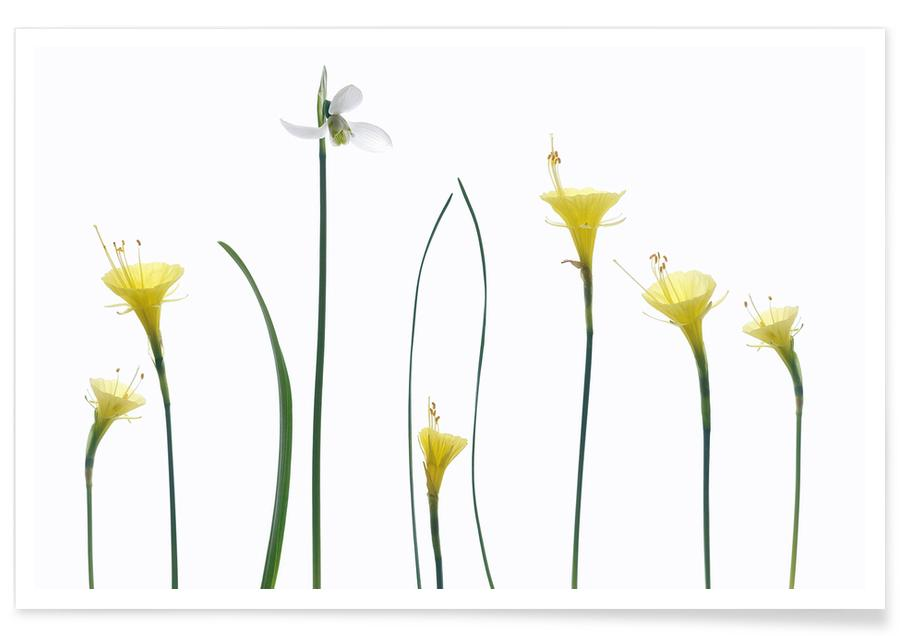 Spring Flowers -Poster