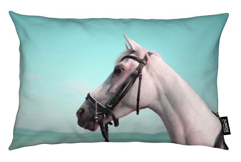 Pferde, Horse Portrait