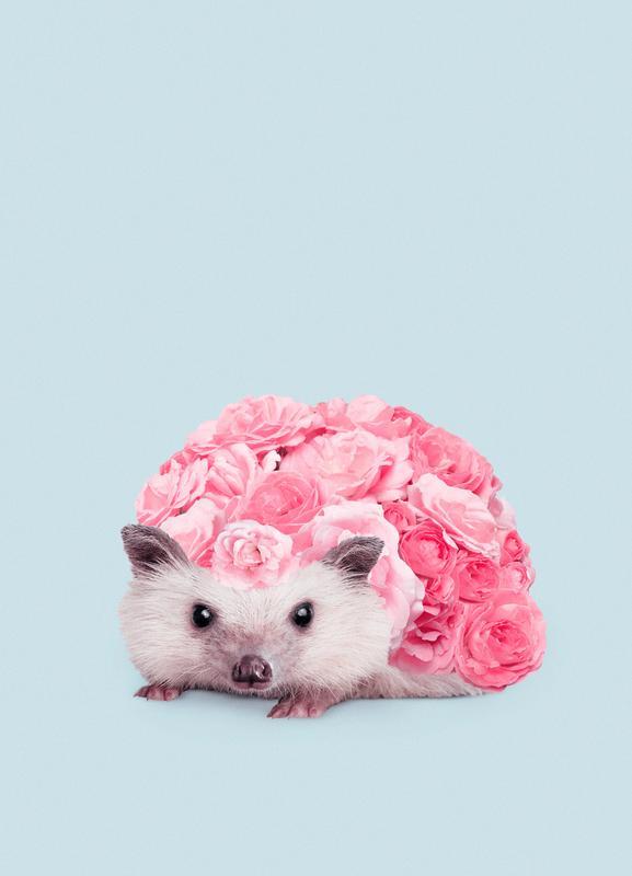 Hedgerosehog Canvas Print