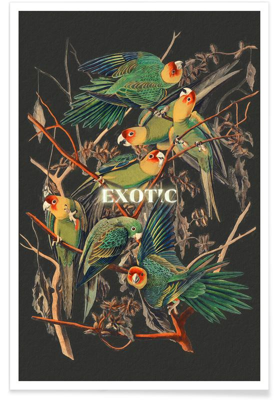 , Exotic affiche