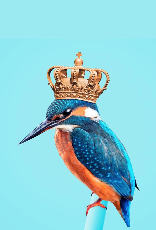 Kingfisher acrylglas print