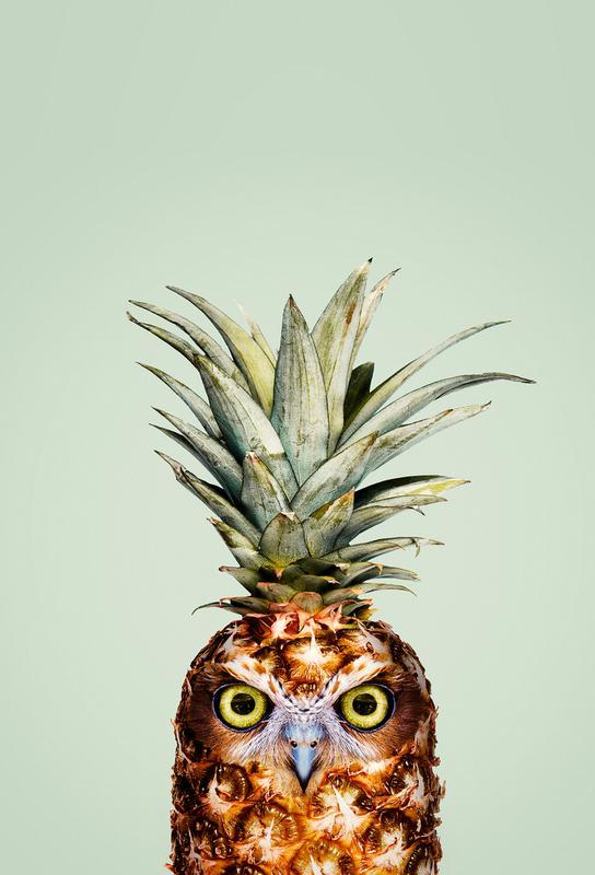 Pineapple Owl alu dibond