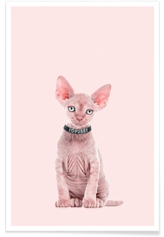 Katte, All Cats Are Beautiful Plakat
