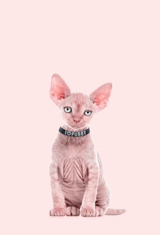 All Cats Are Beautiful Aluminium Print