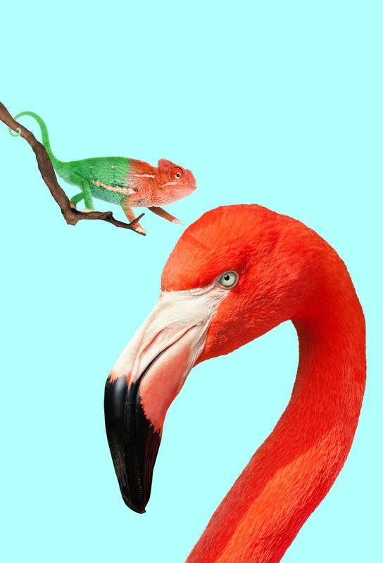 Colorful Friends -Alubild