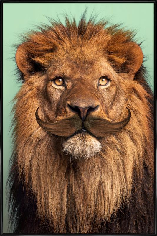 Bearded Lion affiche encadrée