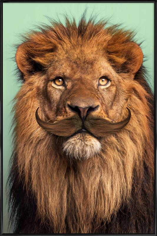 Bearded Lion Framed Poster